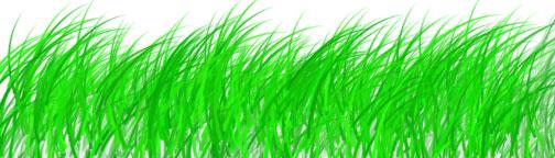 brushes-grass.jpg